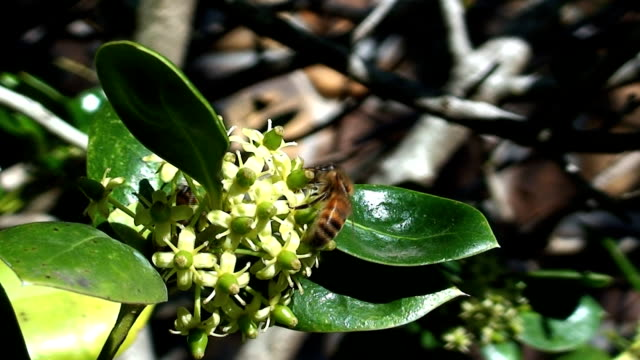 vídeos de stock, filmes e b-roll de abelha reunião - processo vegetal