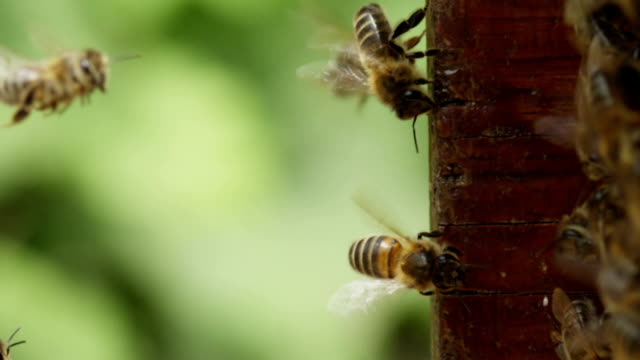 bee hive - bee stock videos & royalty-free footage