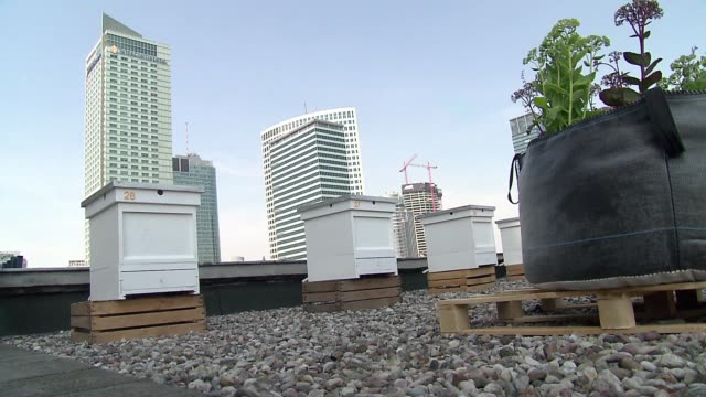 bee hives on roof of palace of science and culture in warsaw - roof stock videos & royalty-free footage
