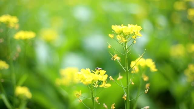 vídeos de stock, filmes e b-roll de abelha no jardim - abelha obreira