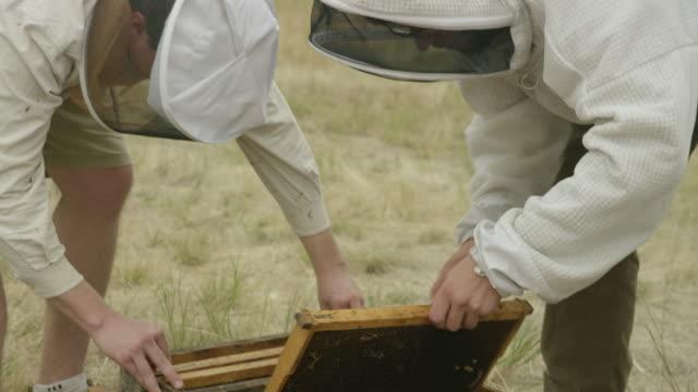 stockvideo's en b-roll-footage met bee keepers lifting up trays - honingbij