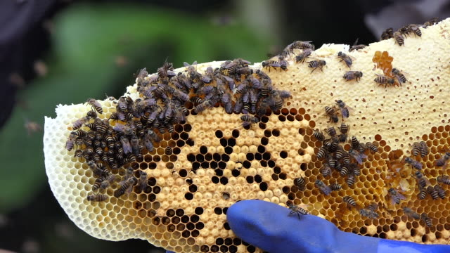 vídeos de stock, filmes e b-roll de bee keepers sumber urip village - artrópode