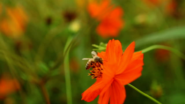 bee life - invertebrate stock videos & royalty-free footage