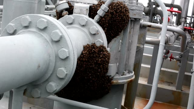 bee on cargo pump - animal nose stock videos & royalty-free footage