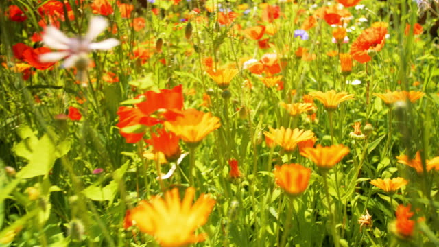 bee on flower - meadow stock videos & royalty-free footage