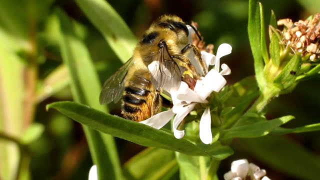 bee on flower - invertebrate stock videos & royalty-free footage