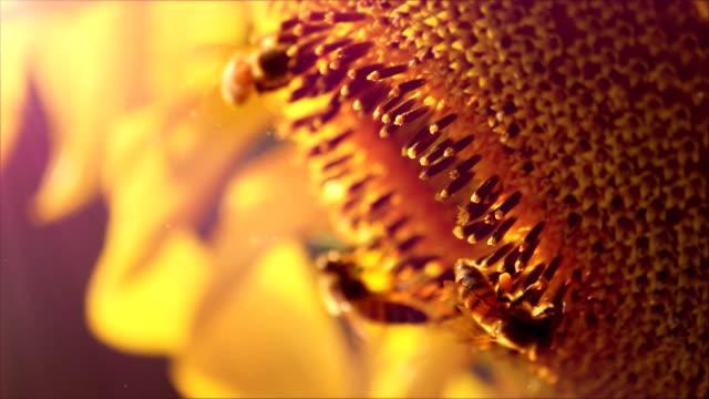 stockvideo's en b-roll-footage met bee on the flower - spectrum
