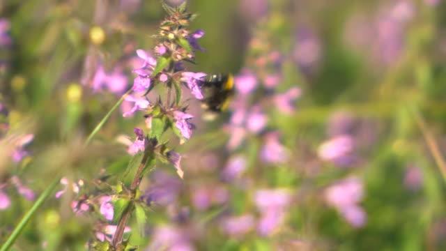 bee on wildflower - wildflower stock videos & royalty-free footage