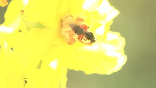 Bee on Yellow Flower Part III