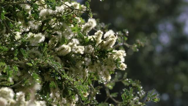 Bee Pollinates