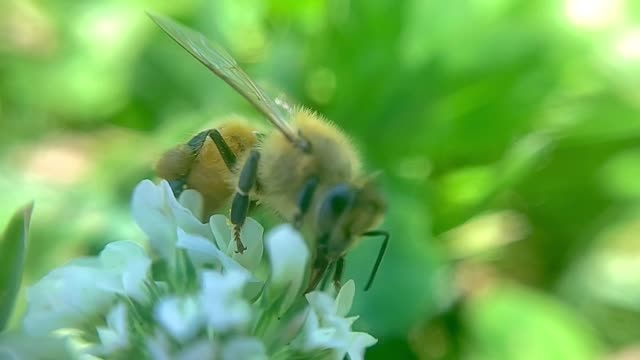 bee pollinating flower - intricacy stock videos & royalty-free footage
