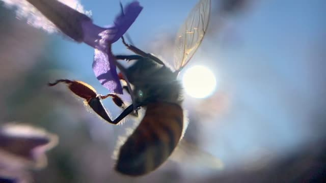 bee pollinating flower - small stock videos & royalty-free footage