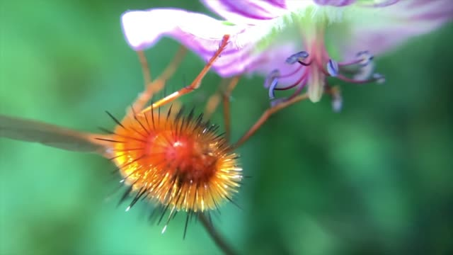 bee pollinating flower - zoology stock videos & royalty-free footage