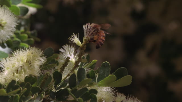 bee pollinating - zoology stock videos & royalty-free footage
