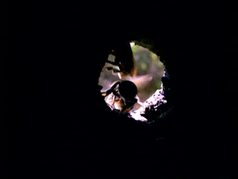 bee, ms p.o.v. from inside nest of bees flying from nest entrance, panama, central america - medium group of animals stock videos & royalty-free footage