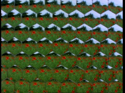 bee pov of red poppy field, through honeycomb lens - lens eye stock videos and b-roll footage