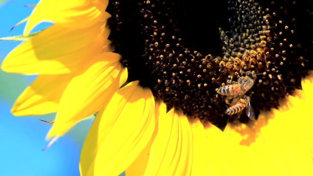 Bee Slow Motion