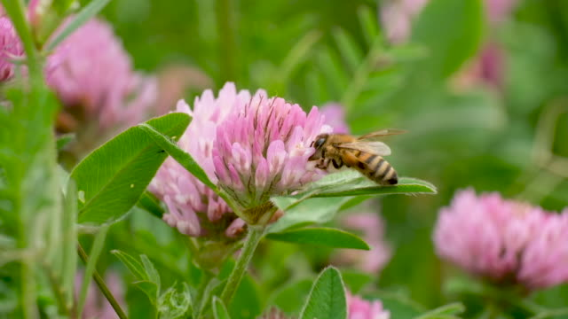 DEU: May 20 Is World Bee Day
