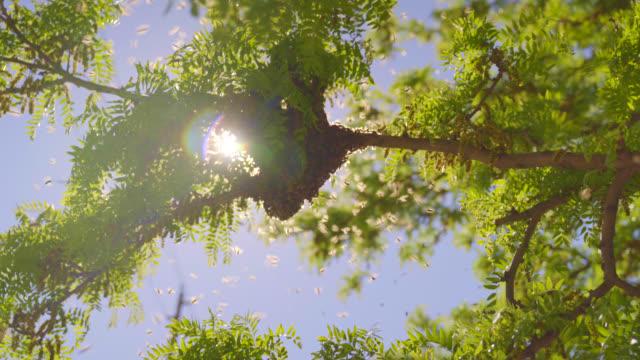 stockvideo's en b-roll-footage met een zwerm bijen wordt verzameld in een boom - medium - honingbij