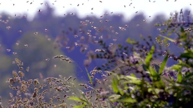 夏の晴れた日にビーの群れ - 虫の群れ点の映像素材/bロール