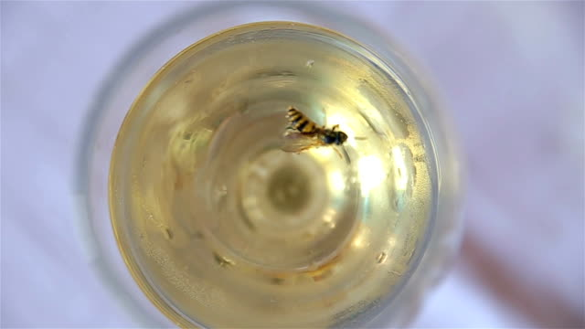 bee trapped in a glass - trapped stock videos & royalty-free footage
