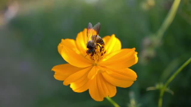 bee - bi insekt bildbanksvideor och videomaterial från bakom kulisserna