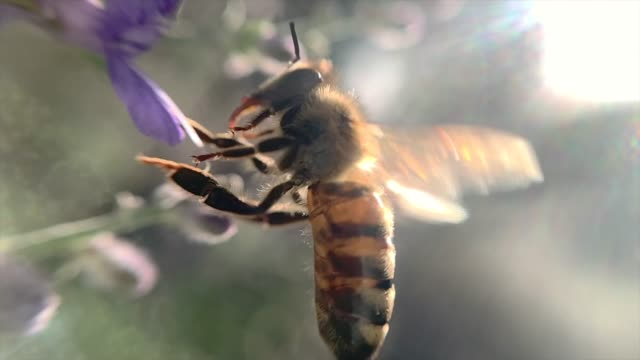 bee - small stock videos & royalty-free footage