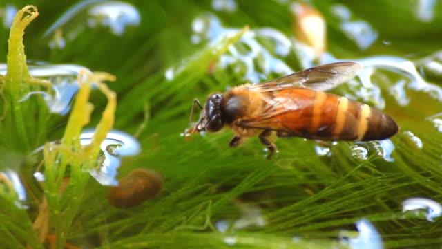 bee - beehive stock videos & royalty-free footage