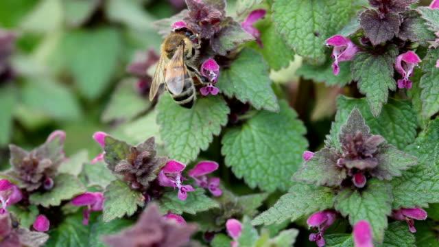 bee - pollen grain stock videos & royalty-free footage