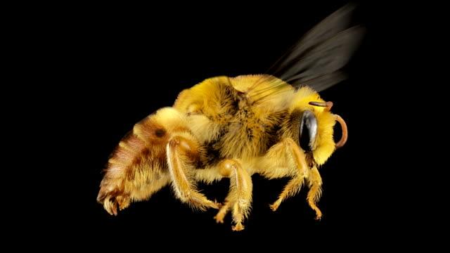 stockvideo's en b-roll-footage met bee - bij