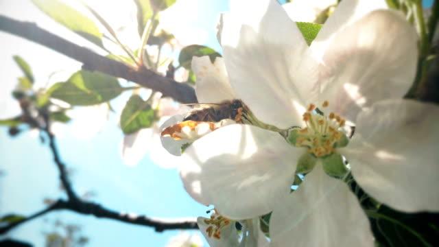 vidéos et rushes de abeille  - membre partie du corps