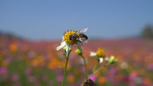 bee - pollination stock videos & royalty-free footage