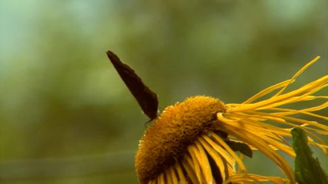 vídeos de stock e filmes b-roll de abelha com buterfly - invertebrado