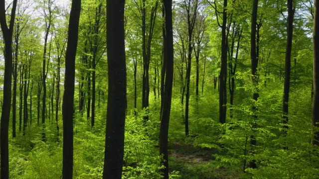 beech forest - tree trunk stock videos & royalty-free footage