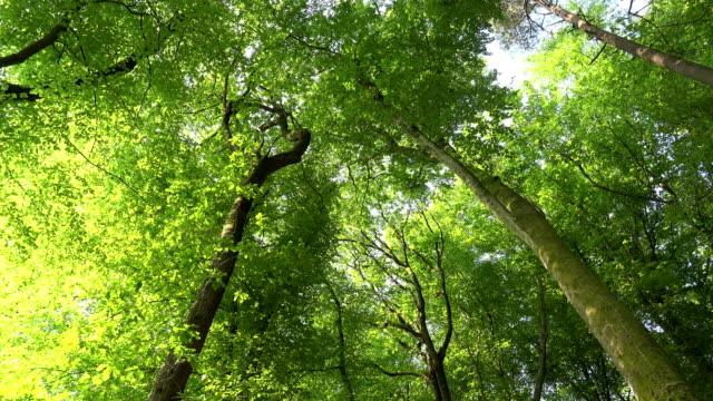 beech forest - saarburg stock-videos und b-roll-filmmaterial