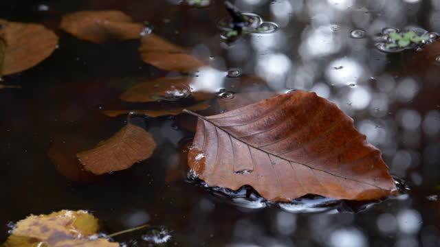 vídeos de stock, filmes e b-roll de folha de faia flutuando na água parada - forma da água