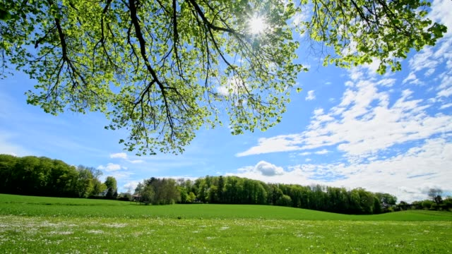 Beech tree leaves and landscape in spring with sun, Inning Stegen, Fuenfseenland, Upper Bavaria, Bavaria, Germany