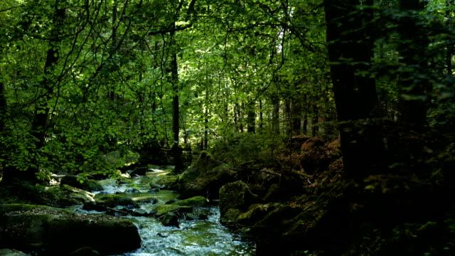 vídeos de stock, filmes e b-roll de floresta de faias cobrindo creek (4 km/uhd para hd) - floresta da bavária