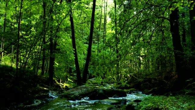 vídeos y material grabado en eventos de stock de bosque de árboles que cubre bosque creek dolly shot (4 k uhd a/hd) - plano de plataforma rodante