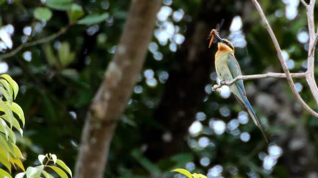 vídeos y material grabado en eventos de stock de abejaruco pájaro de árbol - green de golf