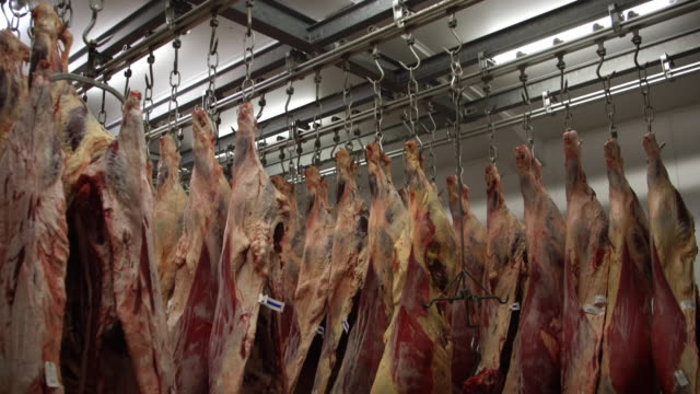 Beef carcasses hang in an abattoir, UK.