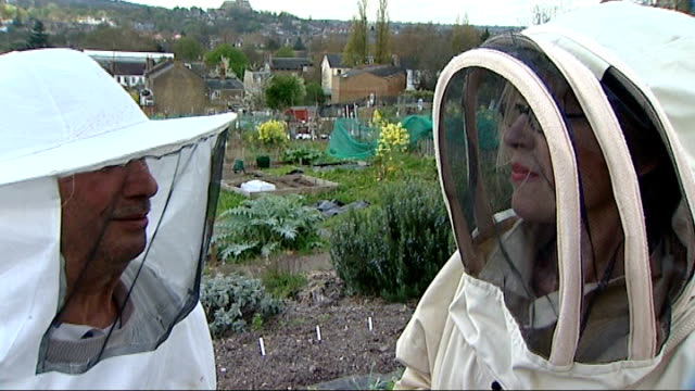 bee-friendly garden opens on the southbank; england: london: peckham: ext general views of allotments close shot bees on hive bees buzzing around... - buzzing stock videos & royalty-free footage