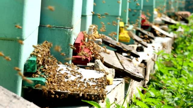 beehive + audio - beehive stock videos & royalty-free footage