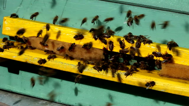 vídeos de stock, filmes e b-roll de beehive de áudio - zoologia