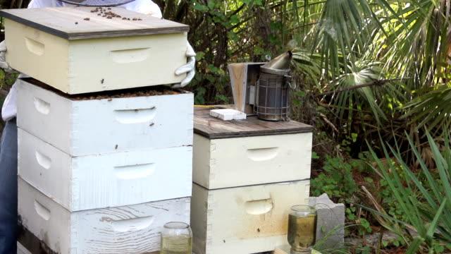 vídeos de stock e filmes b-roll de beehive entrance slow motion wide shot - grupo mediano de animales
