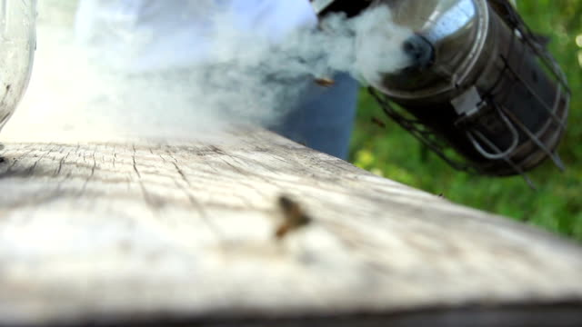vídeos de stock e filmes b-roll de beehive smoker top and bees - grupo mediano de animales