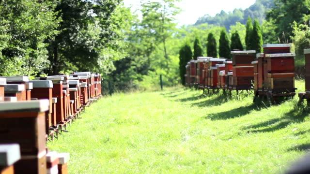 vidéos et rushes de ruche - ruche
