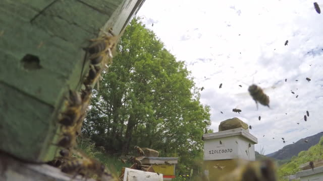 stockvideo's en b-roll-footage met beehives and bees flying around - grote groep dieren