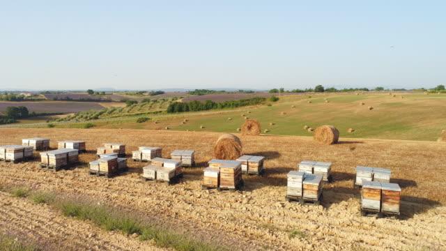 vidéos et rushes de ruches aerial dans la campagne de provence - ruche