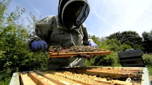 beekeeper and hive - sicurezza video stock e b–roll